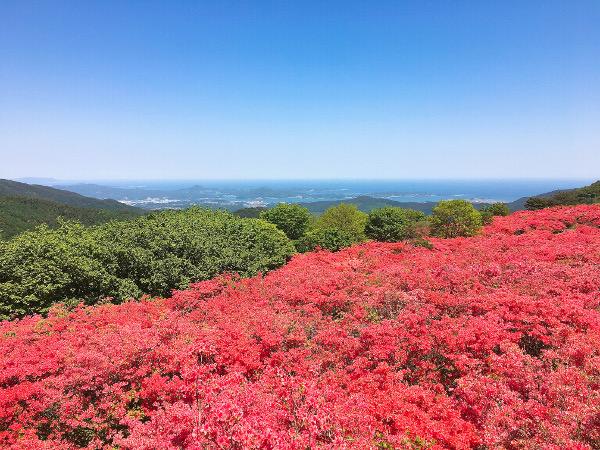 気仙沼・徳仙丈山つつじ2018年5月20日